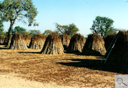 Thatching Products